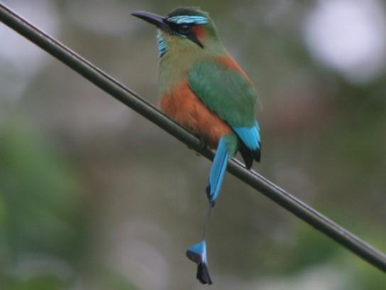 tiny birds in nicaragua